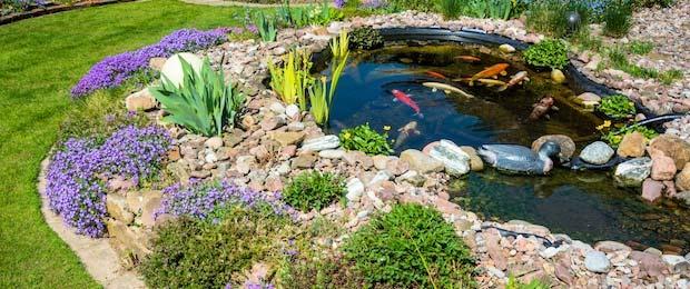 Wilt u een vijver laten aanleggen van zwemvijver tot for Koivijver aanleggen tips
